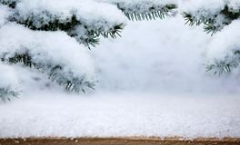 Изморозь и снег на ели в лесе зимы Стоковое Фото