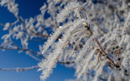 Изморозь на ветви Стоковое Фото