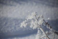 Изморозь на ветви Стоковая Фотография