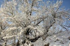 Изморозь на ветвях дерева стоковое изображение rf
