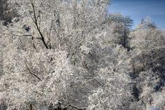 Изморозь на ветвях дерева стоковая фотография rf