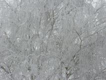 Изморозь на дереве стоковые фото