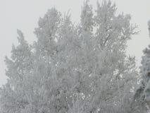 Изморозь на дереве стоковые изображения rf