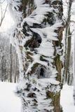 Изморозь на дереве в ландшафте зимы Стоковые Изображения RF