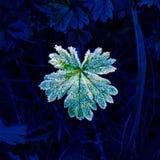 Изморозь на зеленых лист Стоковое фото RF