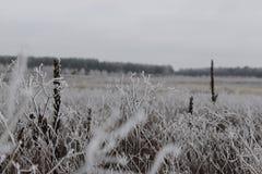 Изморозь на поле стоковое фото