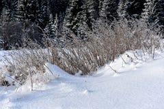 Изморозь на траве Гололедь на траве на холодном утре Стоковые Изображения RF
