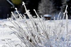 Изморозь на траве Гололедь на траве Стоковое фото RF