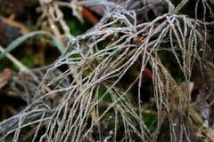 Изморозь на траве Стоковые Изображения
