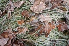 Изморозь на упаденных выпускниках и траве Стоковые Фотографии RF