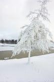 Изморозь покрыла дерево стоковые фото