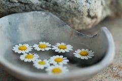 Изначальное раздумье здоровья цветков стоковое изображение