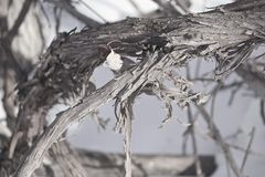 Изначальный unraveling Стоковая Фотография RF