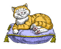 изнеженный кот Стоковые Фотографии RF