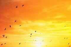 Изображение абстрактных облаков и неба с текстурой птицы летая и цвета захода солнца Стоковая Фотография