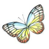 Изображение акварели бабочки летания Стоковая Фотография