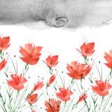 Изображение акварели винтажное, граница ботанической картины, красный мак, роза, лилия, полевые цветки, трава, заводы, листья иллюстрация вектора