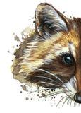 Изображение акварели животного рода захватнических млекопитающих семьи енота, енота енота, енота, portrai енота Стоковое Изображение RF