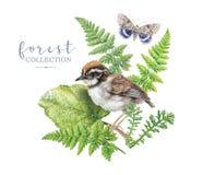 Изображение акварели с заводами и птицей леса стоковое изображение rf