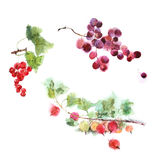 Изображение акварели комплекта ягод Стоковое Изображение RF