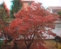 Изображение анаглифа 3D дерева клёна клена Стоковые Фото