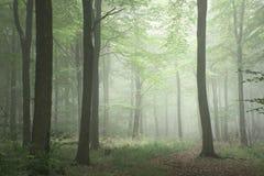 Изображение ландшафта леса сочной зеленой концепции роста сказки туманное Стоковое Фото