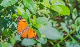 изображение бабочки на лист во времени дня сада Стоковое Изображение RF