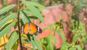 изображение бабочки на лист во времени дня сада Стоковые Изображения RF