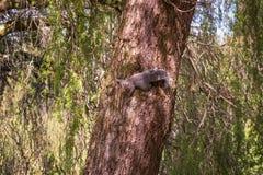 Изображение белки сидя на высоком дереве Стоковые Фото