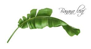 Изображение вектора реалистическое лист банана троповых бесплатная иллюстрация