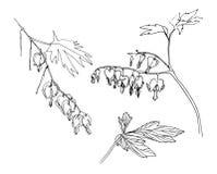 Изображение вектора doodle травы цветастый комплект цветка элементов конструкции внезапный тип эскиза света компьтер-книжки Стоковое Фото