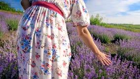 Изображение вид сзади молодой женщины идя на поле лаванды Стоковые Фотографии RF