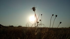 Изображение восхода солнца Стоковая Фотография RF