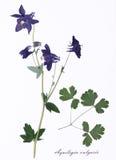 Изображение высушенных цветков подписанных в латыни Стоковое фото RF