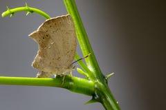 Изображение голубянок бабочки на лист на предпосылке природы Стоковые Фотографии RF