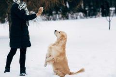 Изображение девушки с labrador на прогулке в парке зимы Стоковые Изображения RF