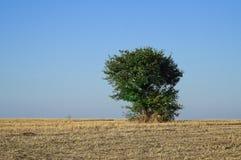 Изображение дерева на день холма солнечный Стоковые Фото
