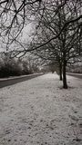 Изображение деревьев в снеге Стоковые Изображения RF