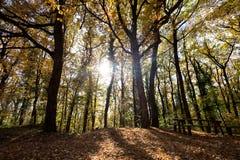 Изображение деревянной скамьи в лесе на солнечном свете Стоковая Фотография RF