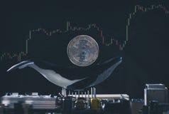 Изображение держателя кита Bitcoin схематическое стоковое изображение