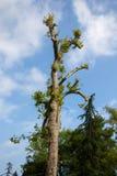 Изображение дерева под голубым небом Стоковое Фото