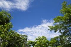 Изображение дерева с голубым небом для предпосылки Стоковое фото RF