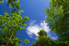 Изображение дерева с голубым небом для предпосылки Стоковые Фотографии RF