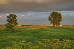 Изображение лета с полем и деревьями Стоковое Фото
