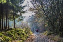 Изображение женщины идя на путь в середине леса стоковая фотография