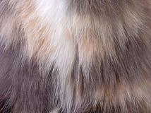 изображение животного крупного плана шерстей Стоковое Изображение