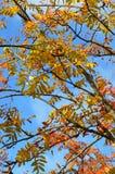 Изображение запаса листвы осени в Новой Англии, США стоковые изображения rf