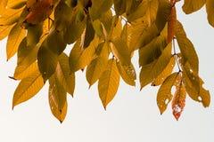 Изображение запаса листьев осени Стоковое Фото