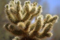 Изображение запаса национального парка Saguaro, США Стоковое Изображение RF