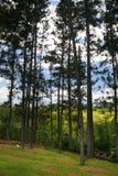 Изображение запаса плантации Croydon, ямайки Стоковая Фотография